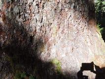 Textura de la corteza con la sombra de la cámara Fotos de archivo libres de regalías