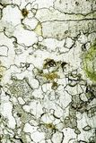 Textura de la corteza de árbol fotos de archivo libres de regalías