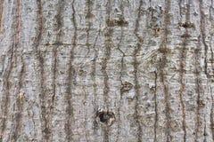 Textura de la corteza de árbol Foto de archivo libre de regalías