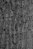 Textura de la corteza de árbol Fotos de archivo