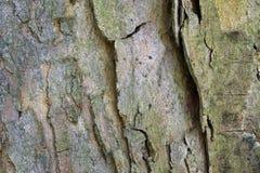 Textura de la corteza de árbol Imagen de archivo libre de regalías
