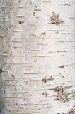 Textura de la corteza de árbol de abedul Fotos de archivo