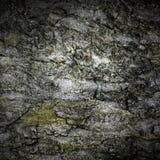 Textura de la corteza de árbol de Grunge Imagen de archivo libre de regalías