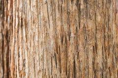 Textura de la corteza de árbol de la teca Fotografía de archivo