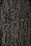 Textura de la corteza de árbol de pino Fotografía de archivo