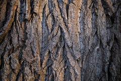 Textura de la corteza de árbol del marrón oscuro Imágenes de archivo libres de regalías