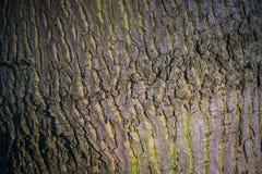 Textura de la corteza de árbol en la luz de la puesta del sol, fondo abstracto Fotos de archivo libres de regalías