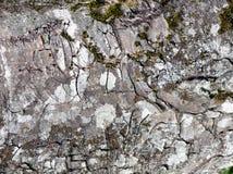 Textura de la corteza de árbol - fondo Fotografía de archivo
