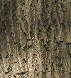 Textura de la corteza de árbol Viejo modelo de madera del fondo de la textura del árbol Hig fotos de archivo libres de regalías