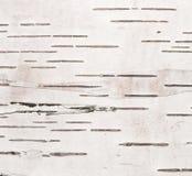 Textura de la corteza de abedul Fotografía de archivo libre de regalías