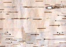 Textura de la corteza de abedul Fotos de archivo
