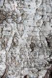 Textura de la corteza de abedul como fondo abstracto Imagen de archivo libre de regalías