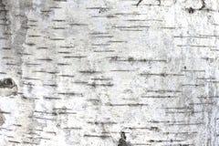 Textura de la corteza de abedul como fondo de madera natural Imagen de archivo libre de regalías