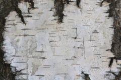 Textura de la corteza de abedul como fondo de madera natural Imágenes de archivo libres de regalías