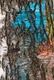 Textura de la corteza de abedul, pintada en diversos colores Fotografía de archivo libre de regalías