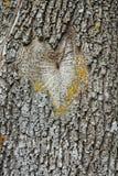 Textura de la corteza de la picea Fondo de un trun del árbol Fotografía de archivo
