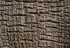 Textura de la corteza de palmera Textura de madera natural del tronco de la palma Imagen de archivo libre de regalías