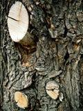 Textura de la corteza de un árbol Fotografía de archivo
