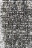 Textura de la corteza del árbol de madera en gris Foto de archivo
