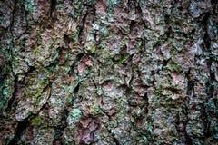 Textura de la corteza del árbol de pino Imágenes de archivo libres de regalías
