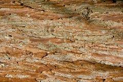 Textura de la corteza del pino Imágenes de archivo libres de regalías