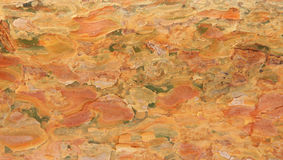 Textura de la corteza del árbol de pino Fotografía de archivo