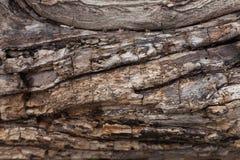 Textura de la corteza Fondo de madera Imagenes de archivo