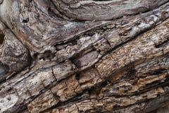 Textura de la corteza Fondo de madera Fotografía de archivo libre de regalías