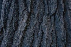 Textura de la corteza de ?rbol vieja foto abstracta de la corteza de árbol de madera foto de archivo