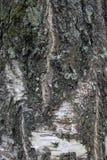 Textura de la corteza de un árbol viejo Imagen de archivo libre de regalías