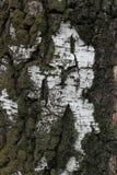 Textura de la corteza de un árbol viejo Imagenes de archivo