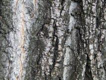 Textura de la corteza de una fruta vieja Imagenes de archivo