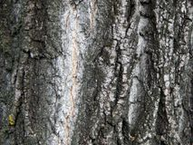 Textura de la corteza de una fruta vieja Imagen de archivo