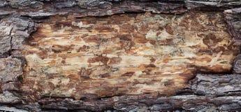 Textura de la corteza y de madera de los fondos Foto de archivo libre de regalías