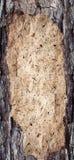 Textura de la corteza y de madera de los fondos Fotografía de archivo