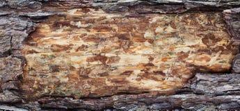 Textura de la corteza y de madera de los fondos Foto de archivo