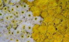Textura de la flor Imágenes de archivo libres de regalías