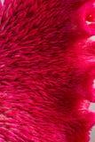Textura de la flor rosada Imagen de archivo