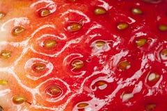 Textura de la fresa Fotos de archivo libres de regalías