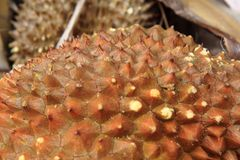 textura de la fruta del durian Foto de archivo