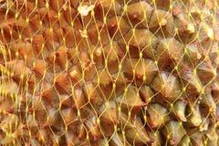 textura de la fruta del durian Imagen de archivo