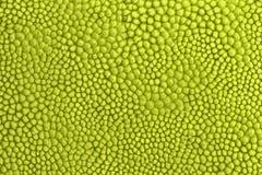 Textura de la fruta tropical del jackfruit en Asia stock de ilustración