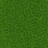Textura de la hierba Imagen de archivo