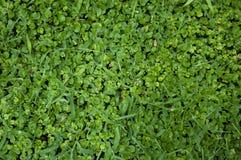 Textura de la hierba Imagen de archivo libre de regalías