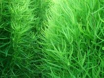 Textura de la hierba Foto de archivo