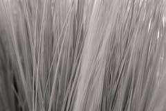 Textura de la hierba artificial con la profundidad del campo baja Imagen de archivo libre de regalías