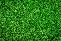 Textura de la hierba como fondo Fotografía de archivo libre de regalías