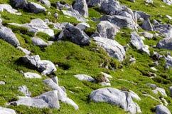 Textura de la hierba con las rocas. Fotografía de archivo