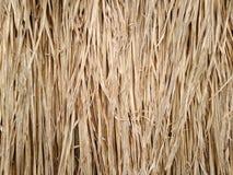 Textura de la hierba del vetiver fotografía de archivo