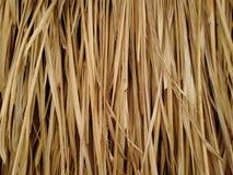 Textura de la hierba del vetiver fotos de archivo libres de regalías